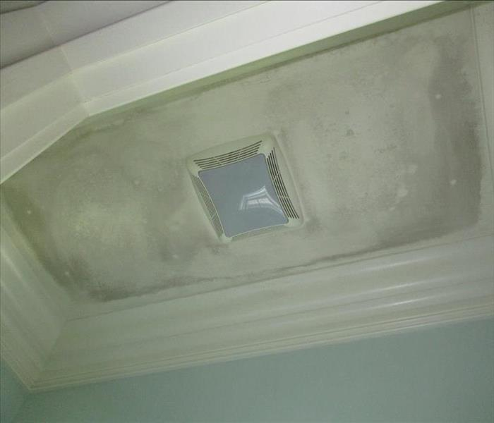 Mold Remediation in Wilson County Before